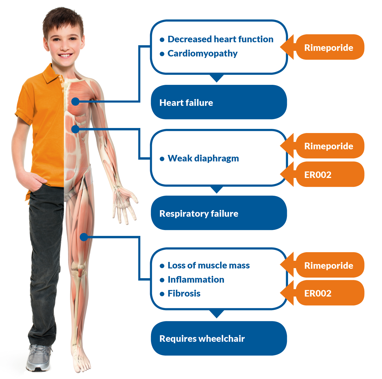 an analysis of duchenne muscular dystrophy Muscular dystrophies are a harling c, chinnery pf, eagle m, bushby k, straub v prevalence of genetic muscle disease in northern england: in-depth analysis of a muscle campbell k change in natural history of duchenne muscular dystrophy with long-term corticosteroid treatment.